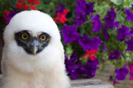 UK Owl and Raptor Displays - 90 Minute Owl Experience for One, Two or Family of Four - Save 63%