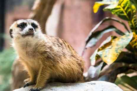 The Animal Ark Travelling Zoo - 30 minute meet and greet meerkat experience for two - Save 53%