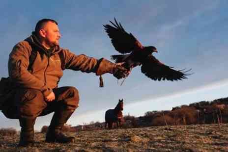 Riverside Falconry - Private Bird of Prey Handling Session - Save 53%