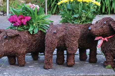 Groupon Goods Global GmbH - One or Two Rattan Cow, Sheep, Pig, Elephant or Dog Planter Set - Save 53%