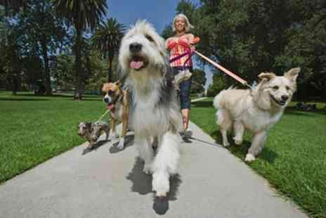 Online Academies - Dog Walking and Pet Sitting Online Course - Save 92%