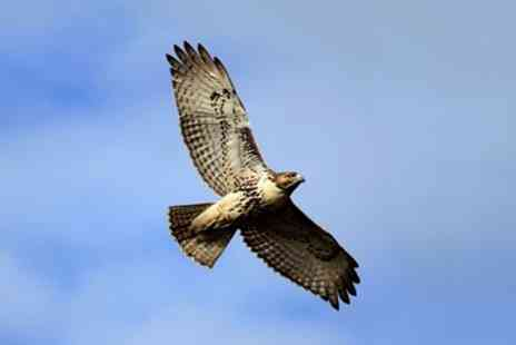 World of Wings - Two Hour Birds of Prey Experience for One, Two or a Family of Four - Save 55%