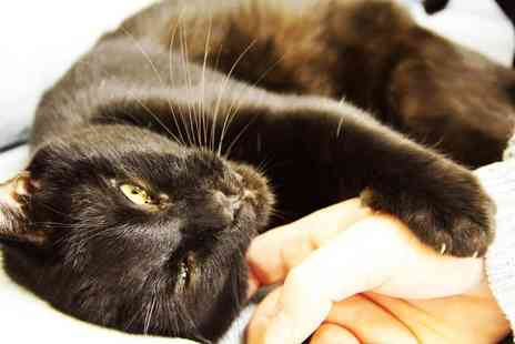 Pause Cat Cafe - Entry for two people to Pause Cat Cafe, Bournemouth meet adorable furry friends - Save 30%
