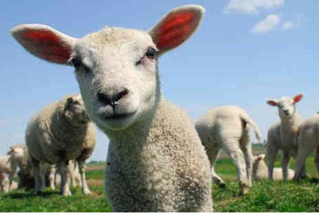 Lower Drayton Farm - Adult entry ticket to the petting farm - Save 38%