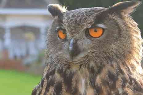 Willows Bird of Prey Centre - Two Hour Falconry Experience for One, Two or Four - Save 62%