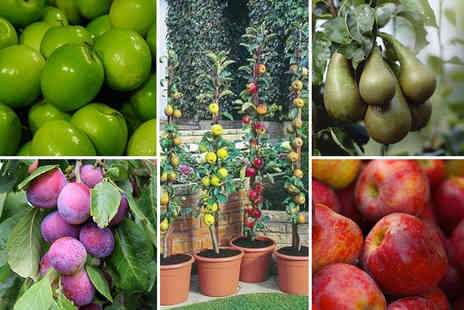 PlantStore - Fruit tree collection choose from two collections - Save 68%