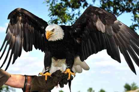 Inspired Falconry - Bird of Prey Experience for One or Two - Save 51%