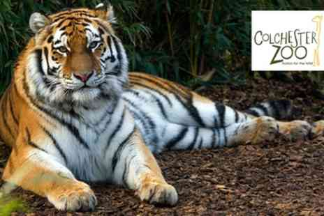 Colchester Zoo - 12 Month Gold Pass Card with Access to 12 Zoos for Child, Adult or Senior Citizen - Save 17%