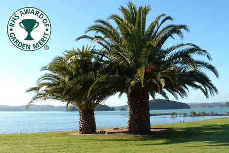 Bentleys - Phoenix canariensis palm tree or pair of palm trees - Save 75%