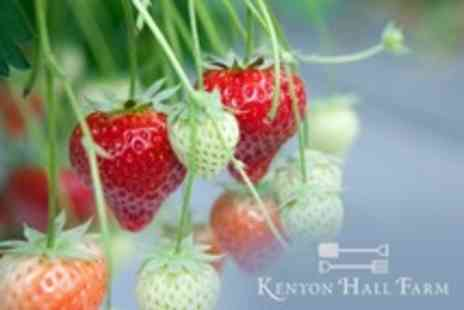 Kenyon Hall Farm - Strawberry Picking For Four With Hot Drink Each - Save 50%