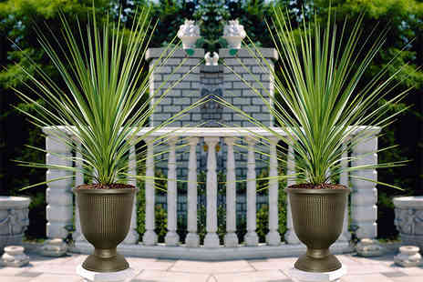 Blooming Direct - Pair of vertical stripe urns and cordylines - Save 46%