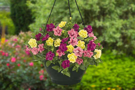 Gardening Direct - Two pre planted hanging baskets - Save 0%