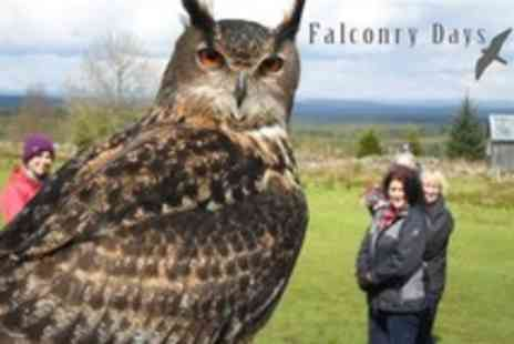 Falconry Days - Three Hour Family Falconry Activity For Two Adults and Two Children - Save 61%