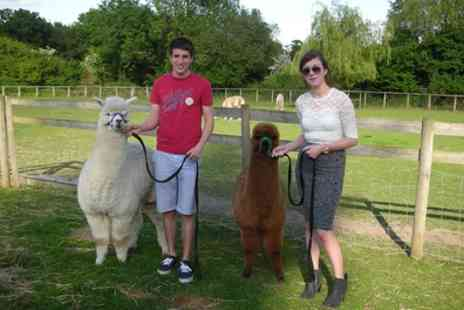 Pennybridge Alpacas - Half Day Alpaca Care Course with Refreshments for Two - Save 0%