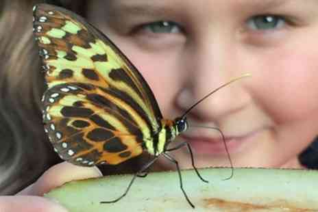 Stratford Butterfly Farm - Full day entry ticket for one child - Save 36%