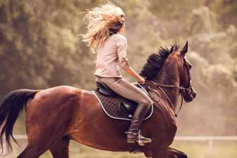 Edinburgh & Lasswade Riding Centre - One Hour Horse Riding Lesson or Hack - Save 44%