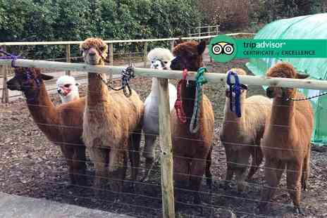 Woolley Animals - Alpaca walk and meet the farm animals experience with refreshments for one or two - Save 0%