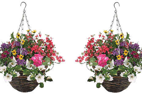 Jersey Plants Direct - Pair of Pre Planted Mixed Floral Rattan Hanging Baskets - Save 17%