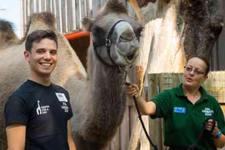 ZSL London Zoo - Ticket to Zoo Keeper for a Day on 17 July to 27 September - Save 36%