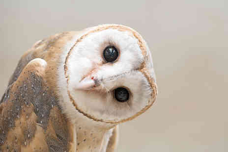 Herrings Green Activity Farm - Half day owl experience for one person - Save 41%