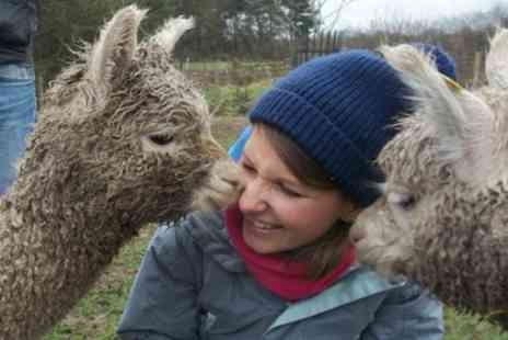 Charnwood Forest - 90 Minute Walk with Alpacas and Drink for One or Two - Save 49%