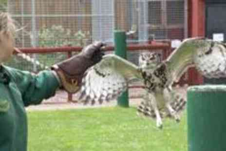 Gentleshaw Wildlife Centre - Get up close to exotic animals and birds of prey - Save 57%