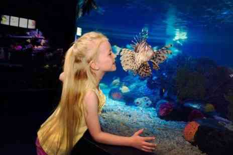 Sea Life Brighton - SEA LIFE Great Yarmouth General Admission - Save 0%