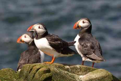 John OGroats Ferries - Wildlife Cruise departs every summer afternoon - Save 0%