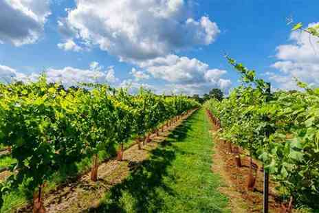 Buyagift - Tour of the Kingscote Estate vineyard with tasting and cream tea for two people - Save 0%