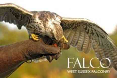 West Sussex Falconry - Three Hour Falconry Experience For One - Save 68%