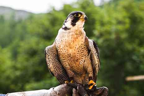 Rutland Falconry and Owl Centre - Two hour birds of prey experience - Save 77%