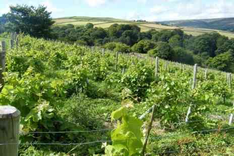 Buyagift - Vineyard tour, wine tasting and afternoon tea for two people - Save 0%