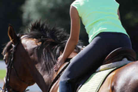 North Laithes Equine - Four One Hour Horse Riding Lessons - Save 53%