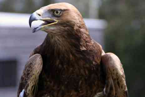 Yarak - Full Day Bird of Prey Experience for One or Two - Save 43%