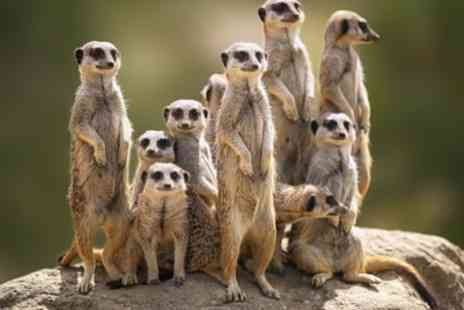 The Animal Experience - Meet the Meerkat Experience for Two or Four - Save 53%