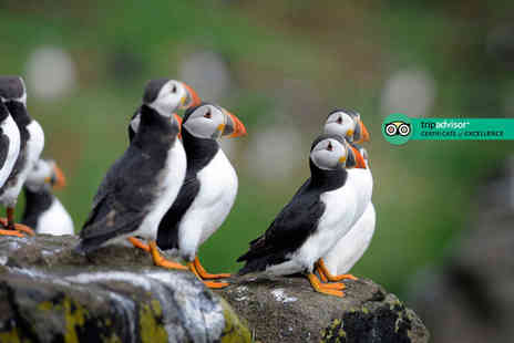 The Scottish Seabird Centre - Entry for two or family of four adults to the award winning Scottish Seabird Centre - Save 66%