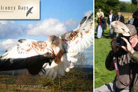 Falconry Days - Birds of prey digital photography experience - Save 63%