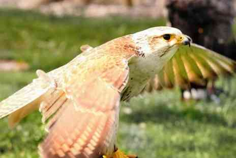 West Sussex Falconry - Half Day Falconry Experience for One or Two - Save 66%