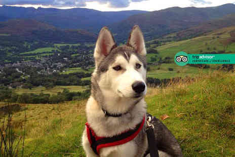 Horse and Husky - Two hour bronze level husky sledding experience for two - Save 69%