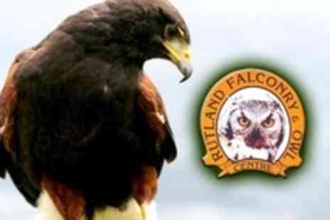 Rutland Falconry and Owl Centre - Two Hours of Woodland Falconry - Save 72%