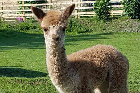 Suzies Alpacas - Alpaca farm entry for two people - Save 50%