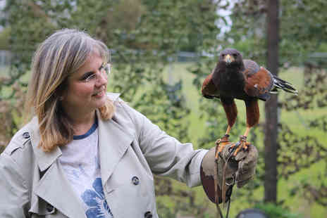Millets Falconry - One Hour Private Falconry Encounter for Two - Save 11%