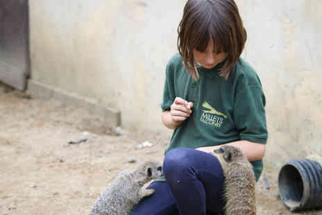 Millets Falconry Centre - Junior Animal Keeper Experience - Save 0%