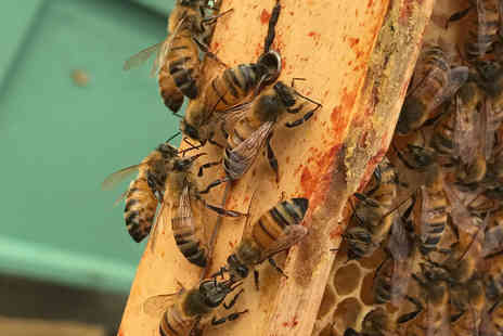 Virgin Experience Days - Beekeeping Experience with Lunch - Save 0%