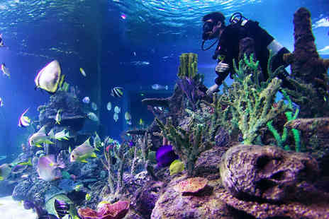 Skegness Aquarium - Dive with Sharks at Skegness Aquarium - Save 27%