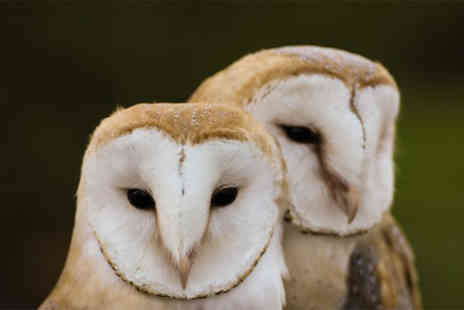 Herrings Green Activity Farm - Birds of prey experience with afternoon tea for one person - Save 55%