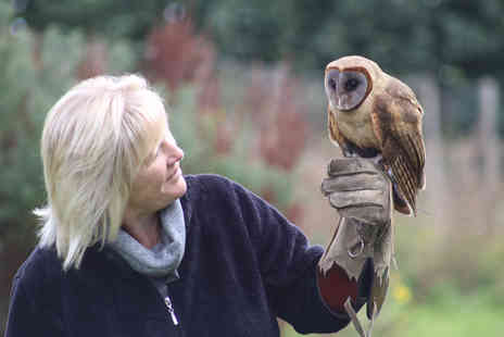 Millets Falconry - One Hour Private Owl Encounter for Two - Save 11%