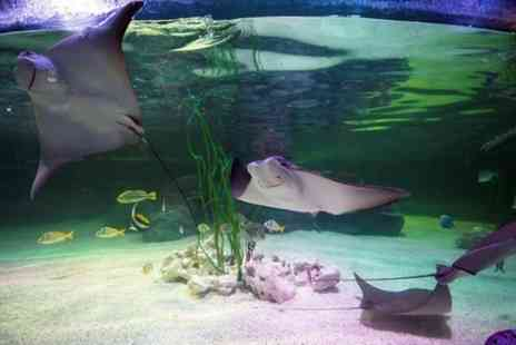 Sea Life Brighton - Sea Life Loch Lomond General Admission - Save 0%