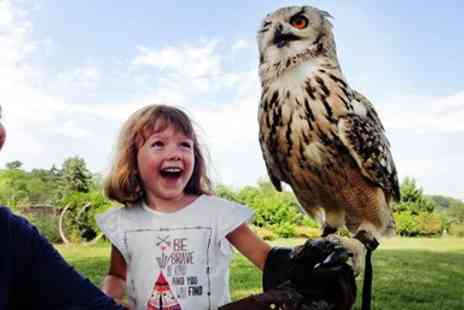Feathers and Fur - Half day birds of prey experience - Save 52%