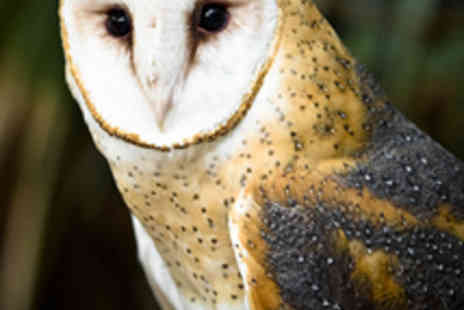 World of Owls - Two Tickets to World of Owls - Save 57%